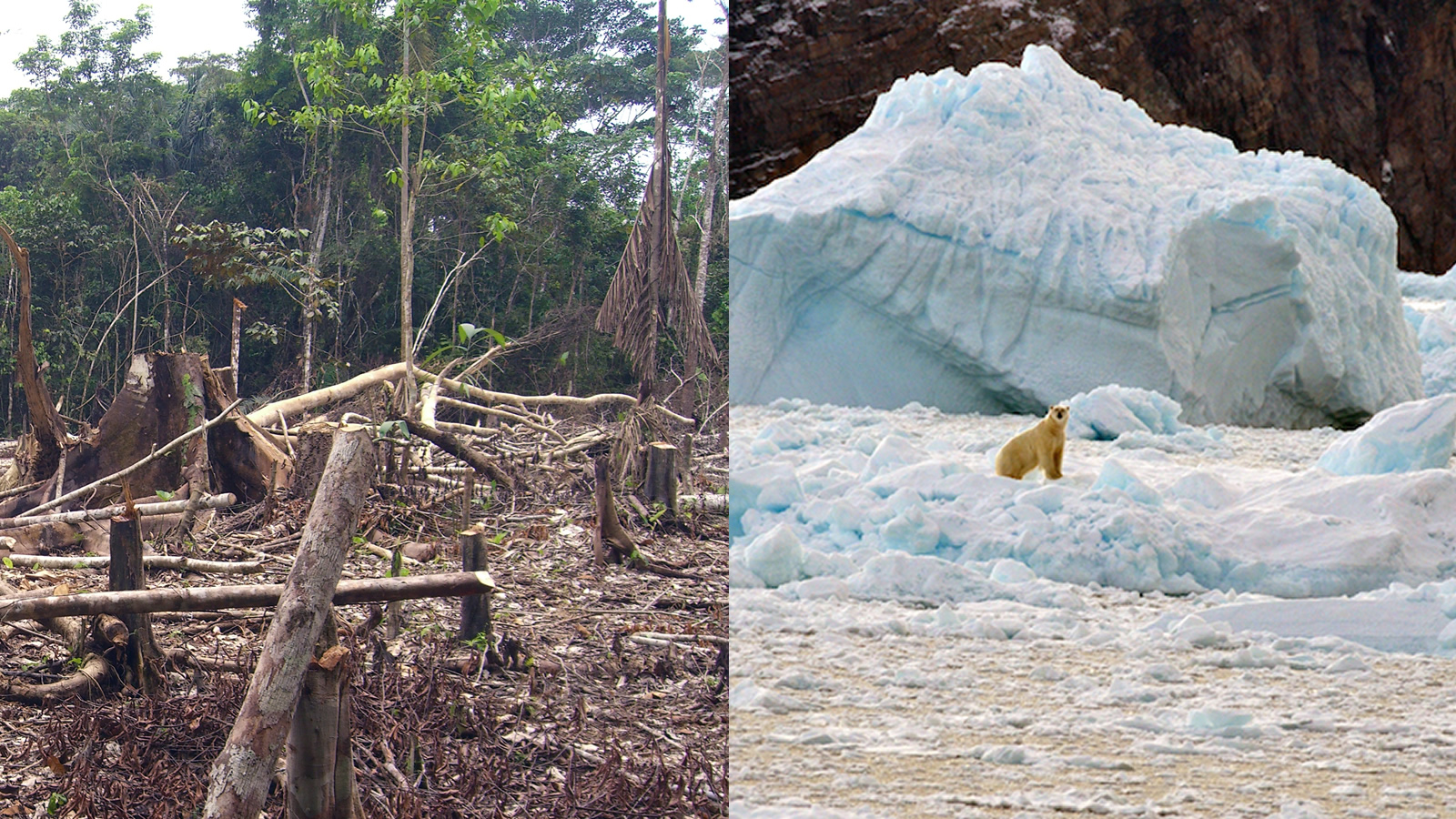 <h4>ACCELERATING GLOBAL WARMING</h4><h5>Scientists estimate that razing forests to make way for crops or cattle accounts for 10-15 percent of the pollution that's warming the planet and changing the climate.</h5><em>Matt Zimmerman via flickr /cc-by-2.0, NASA's Ocean Melting Greenland Mission</em>